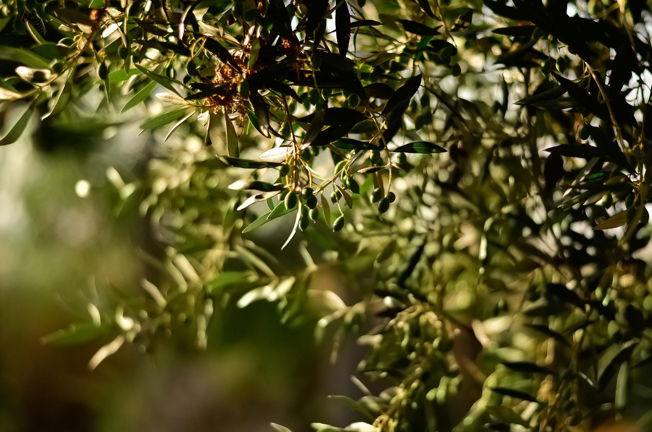 Farmers' Market – Olive Oil from Greece