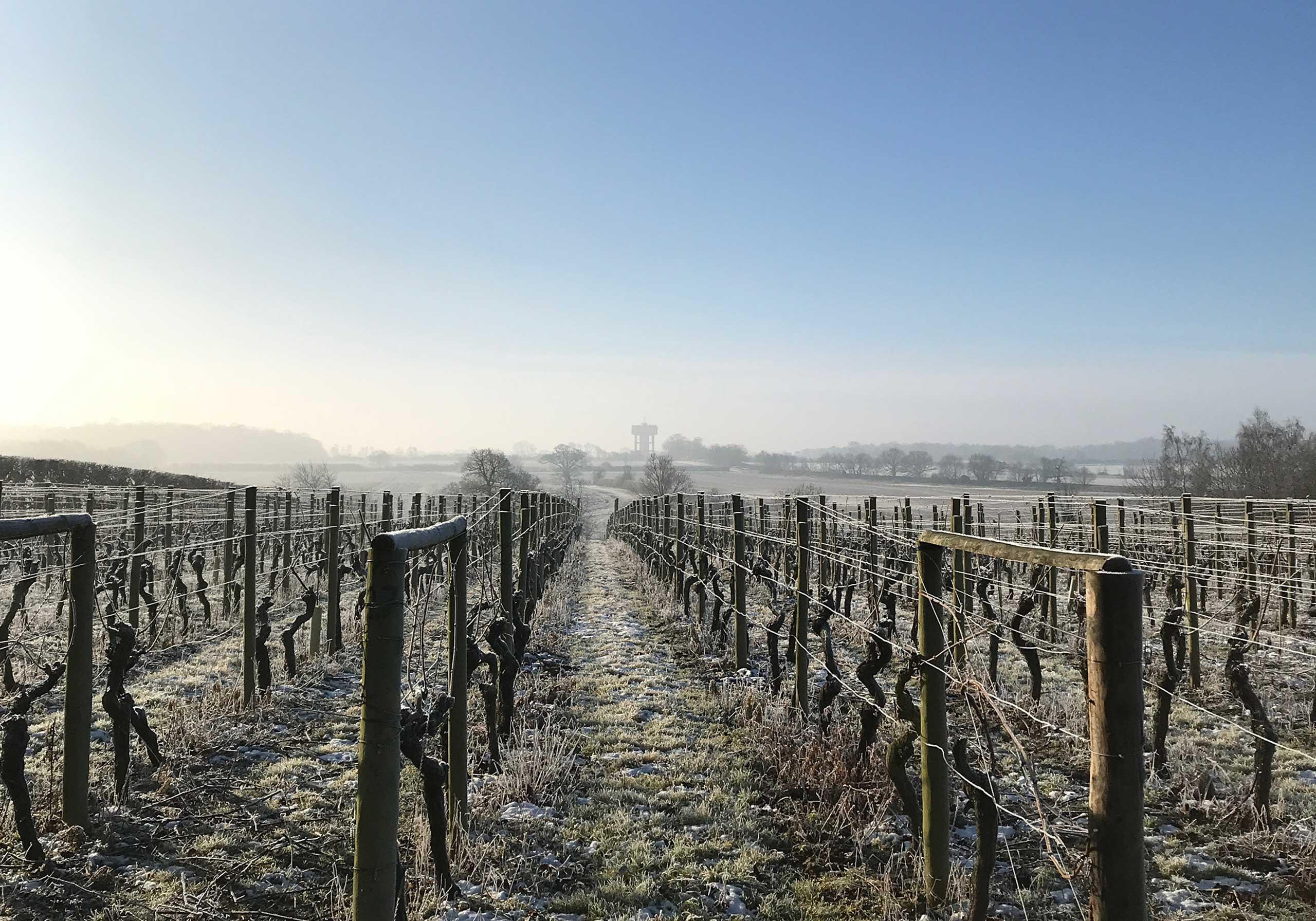 Wyken Vineyard