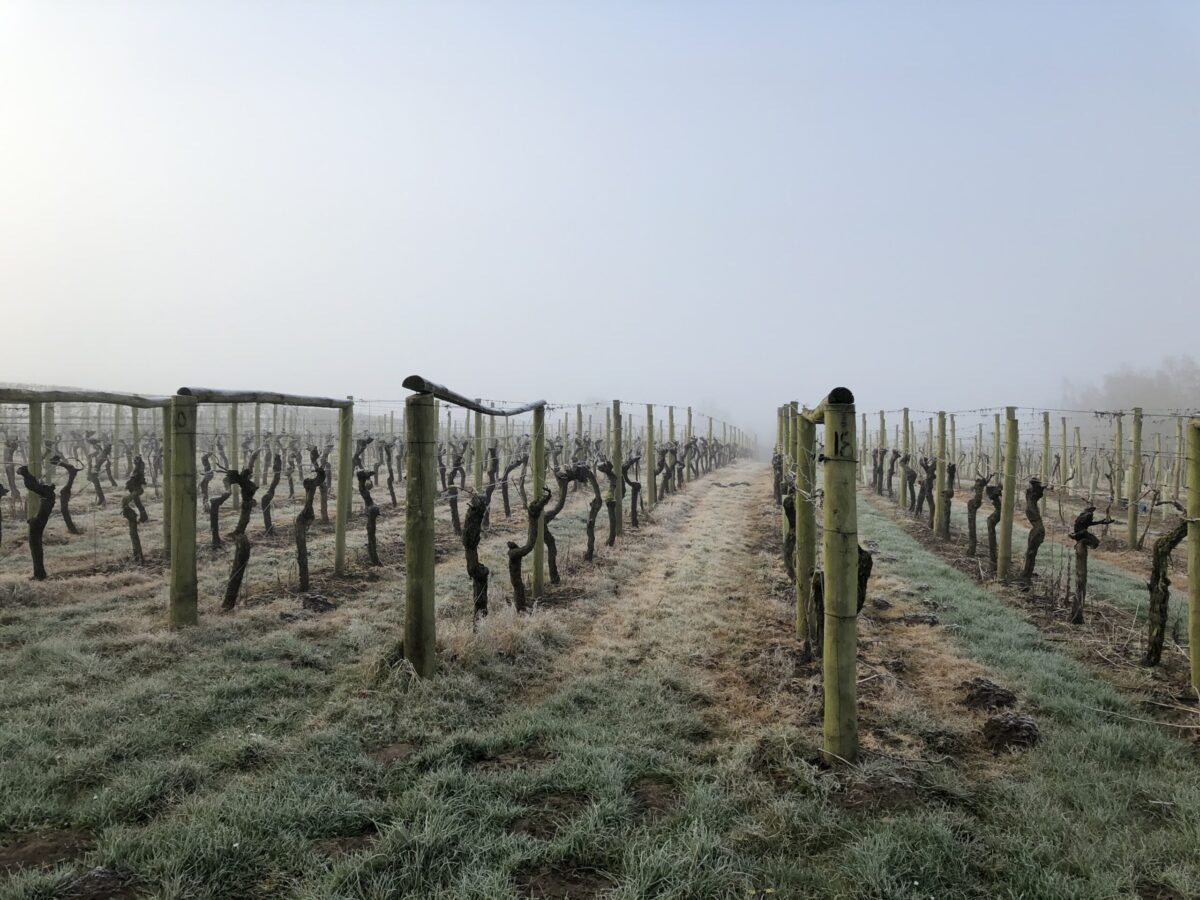 A nervy start to the vineyard year…